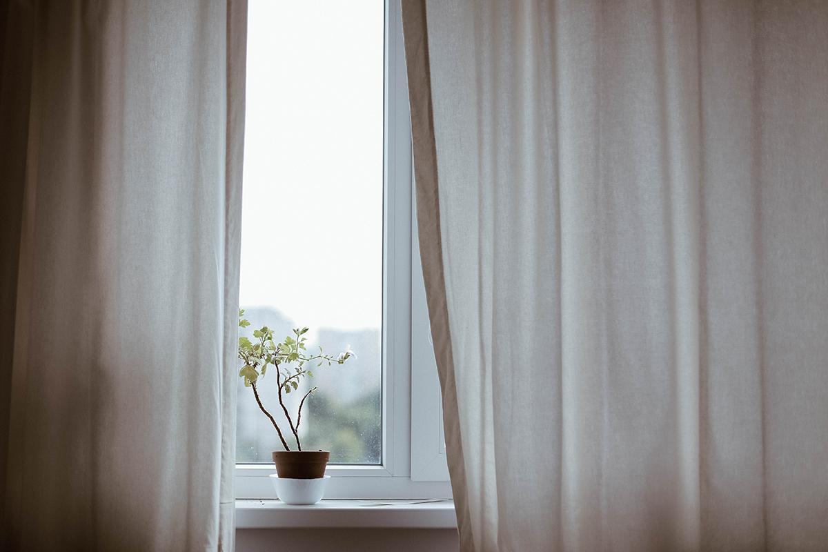 piantina verde su vaso appoggiata su davanzale finestra con tende bianche
